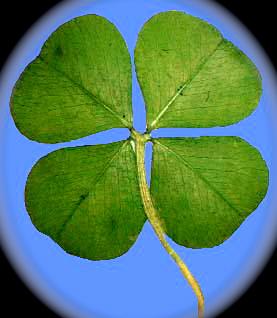 four_leaf_clover.jpg