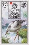 17 storkcrop