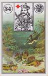 34 fishcrop