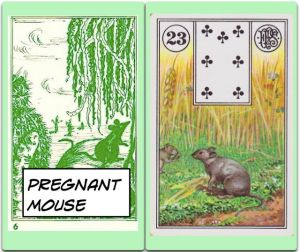pregnantMouse.LenormandMouse