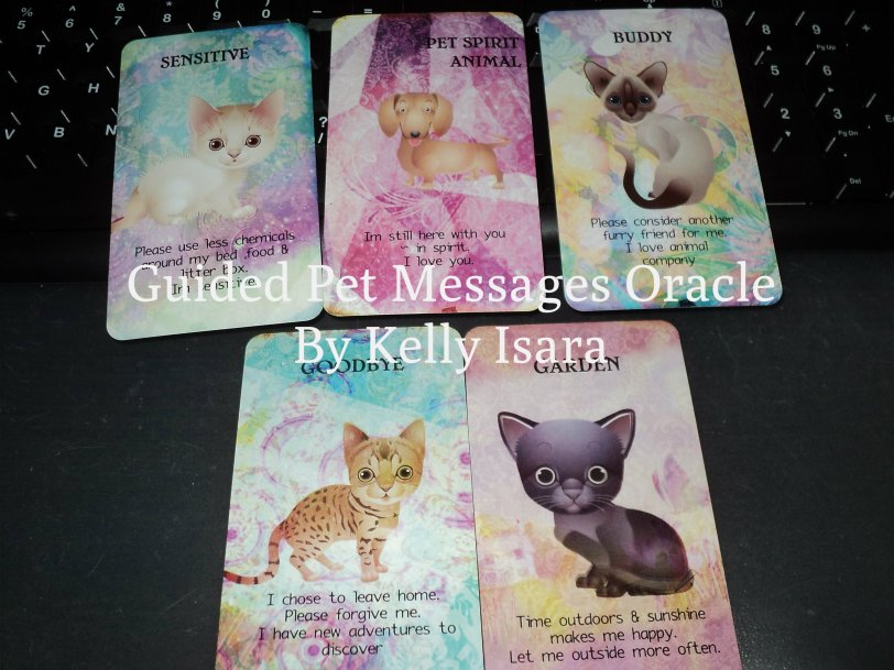 00101-pet-messages-oracle-kelly